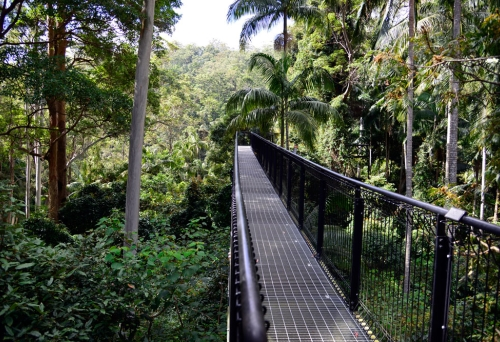 Metal bridge inside the Tamborine Rainforest Skywalk